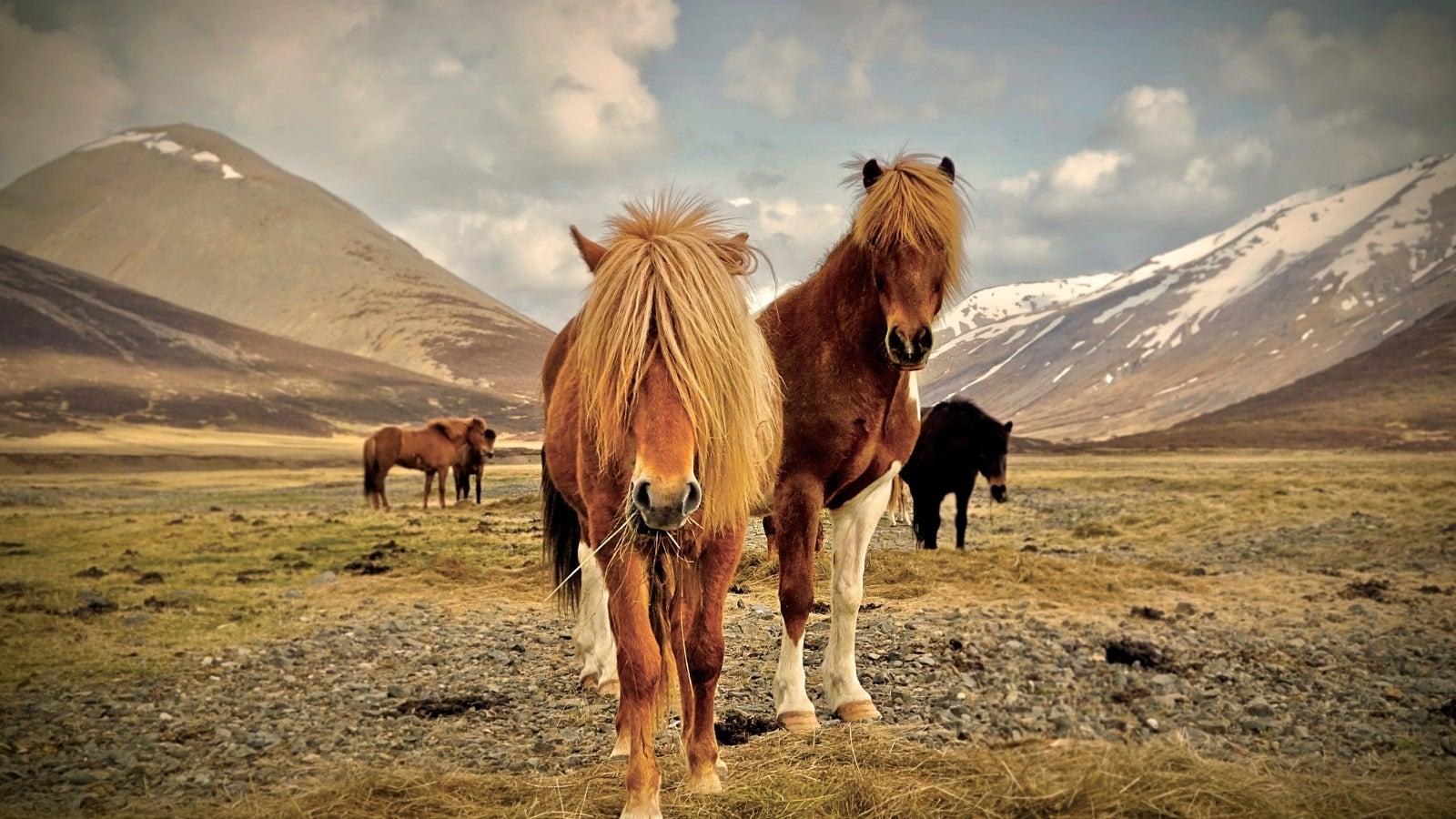 The West Fjords- Northwestern Iceland