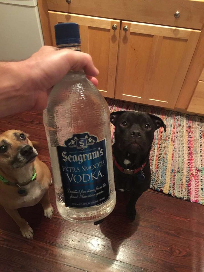 Buy cheap vodka or grain alcohol