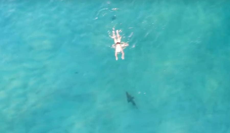 small shark approaches swimmer bondi