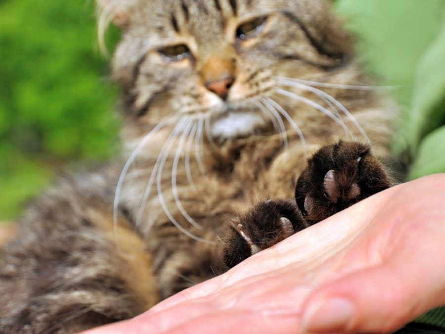 Cat paws.