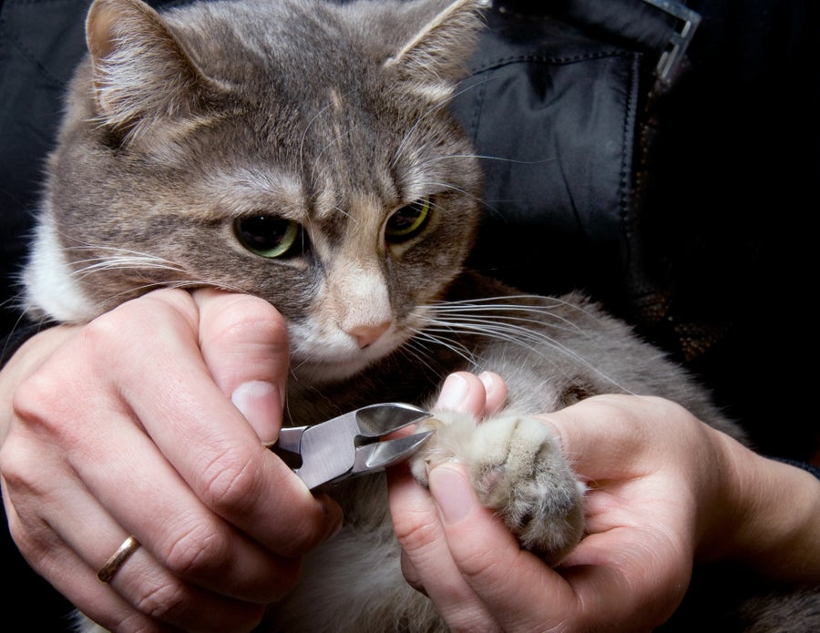 Clip those kitty nails.
