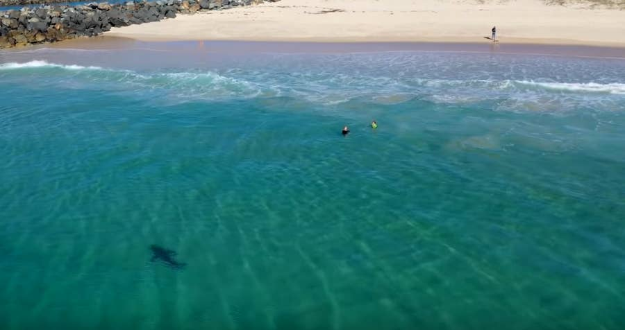 Great White Shark approaches kids swimming at beach