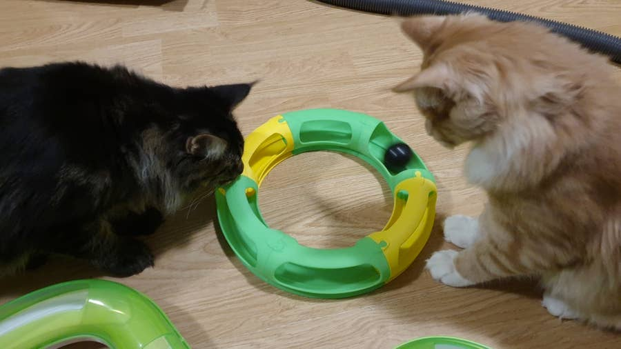 3D printed cat toy race track