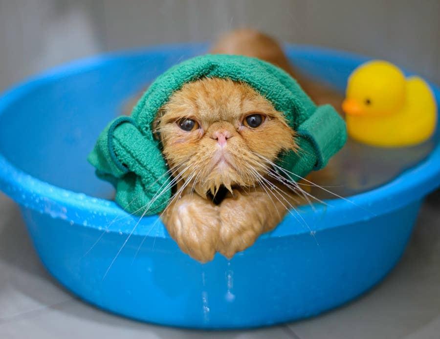 Cat in a bath.