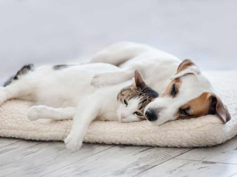 Dog and Cat Laying Down