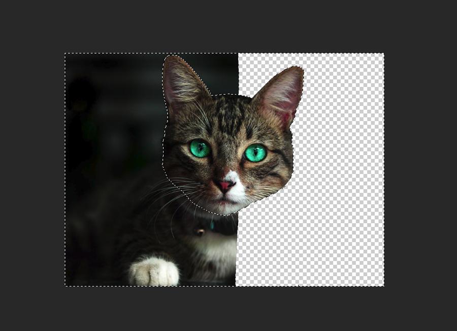 Lasso Area Photoshop