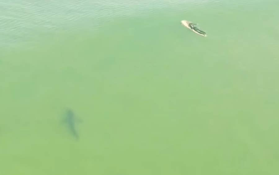 Drone footage of sharks near surfer in California