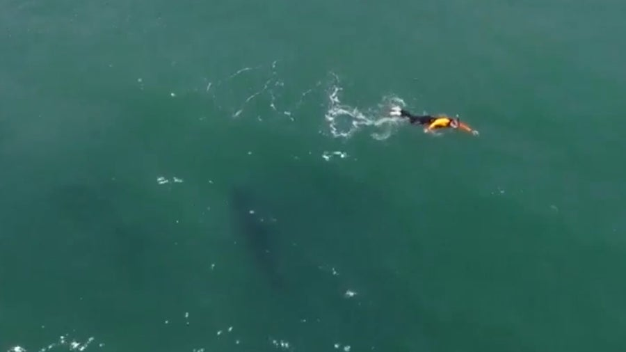 Man in California swims next to shark