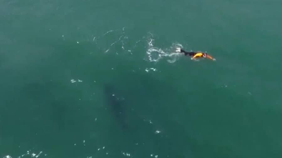 Man in California swims next to shark