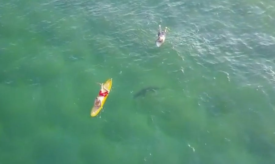 Shark closing in on swimmers