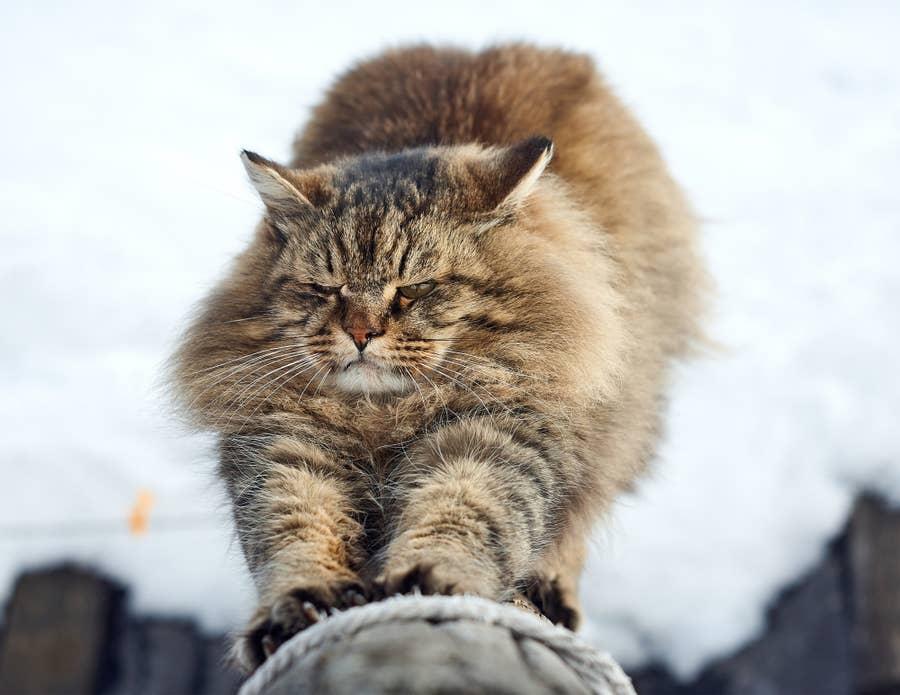Cat in mid scratch.