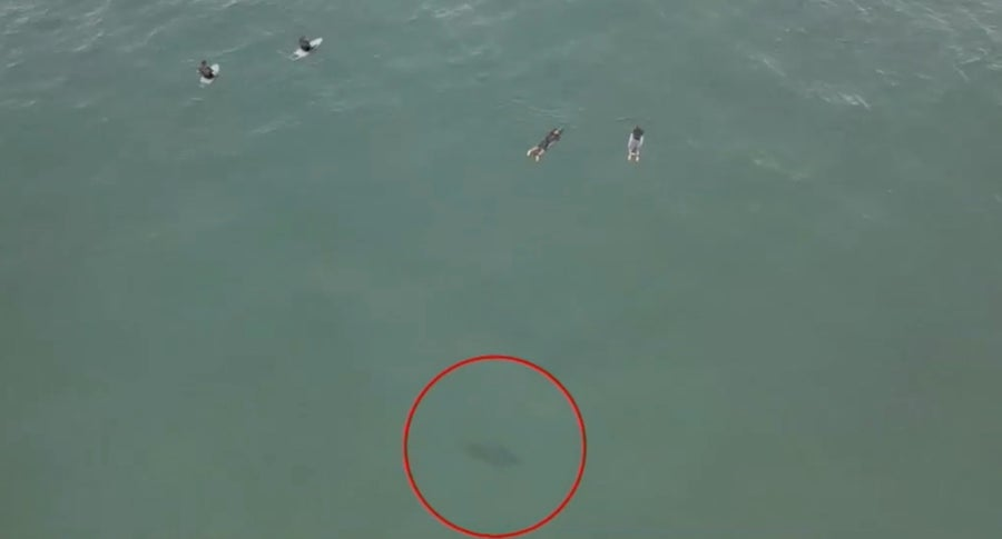 Drone captures shark lurking near surfers