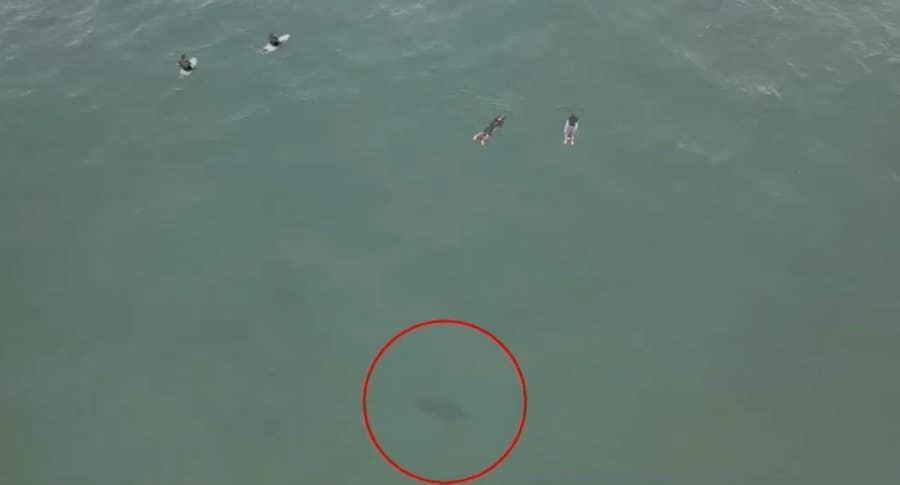 Drone captures shark lurking near surfers