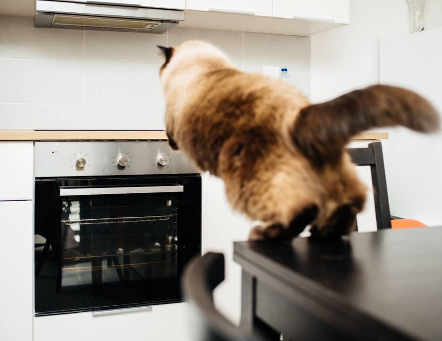Cat leaping to counter.