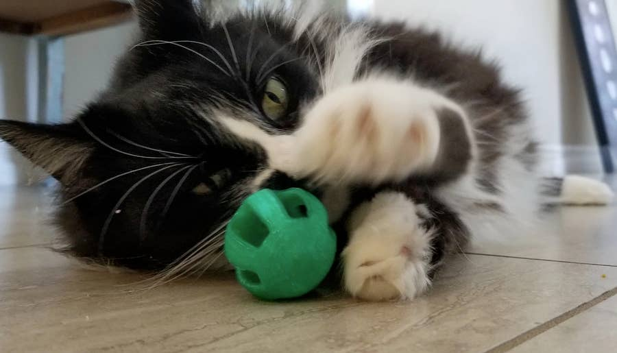 Cat playing with 3D Printed ball