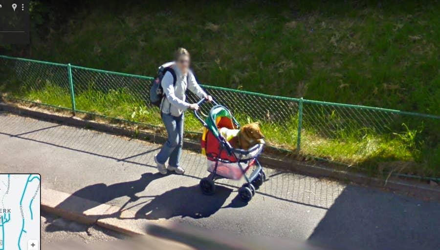 man walking dog google street view