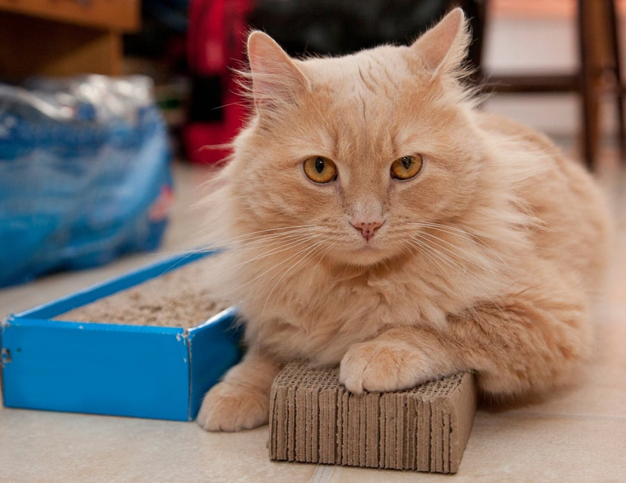 Cat on scratching pad.