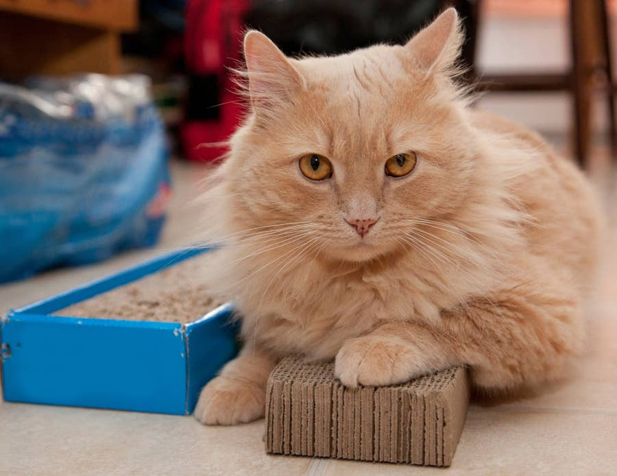 Cat on scratching pad.