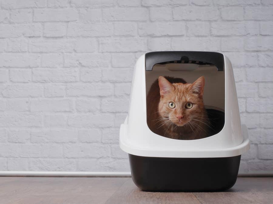 Cat in his litter box.