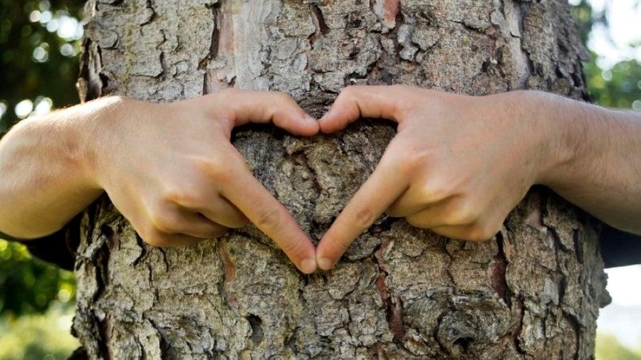 Embrace Tree