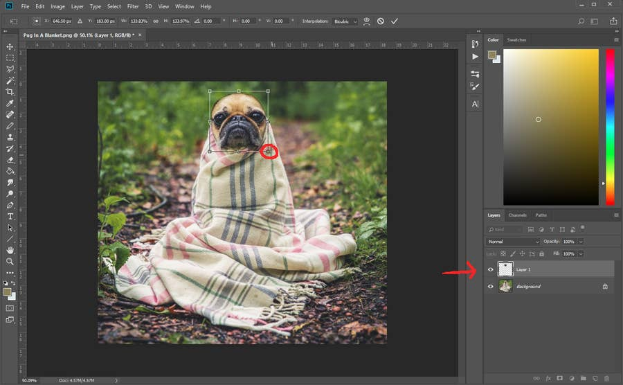 Photoshop Resize Layer
