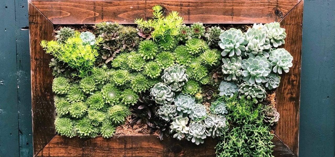 DIY succulent box art