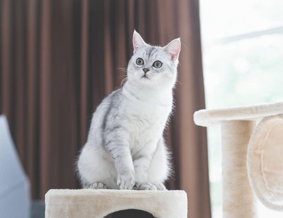 Cat on cat tree.