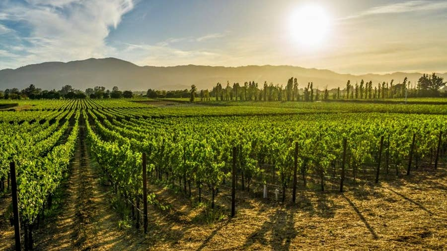 Napa Valley- Napa County, California