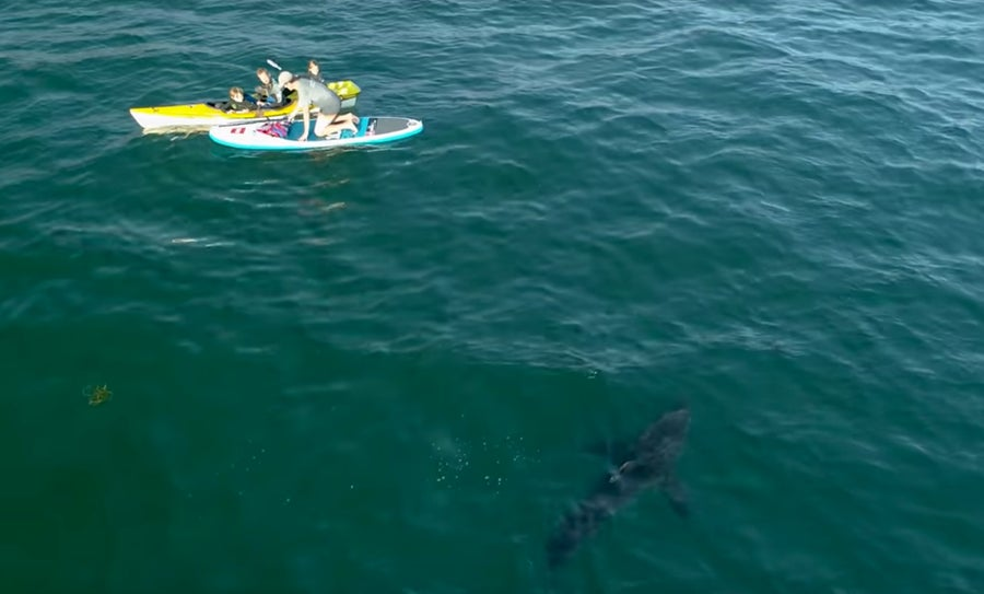 Shark approaches kayakers