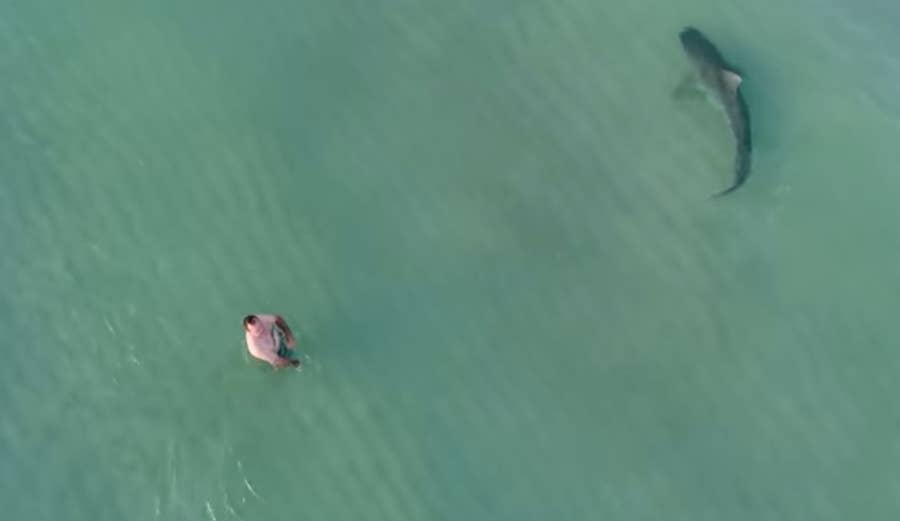 Man near tiger shark drone footage