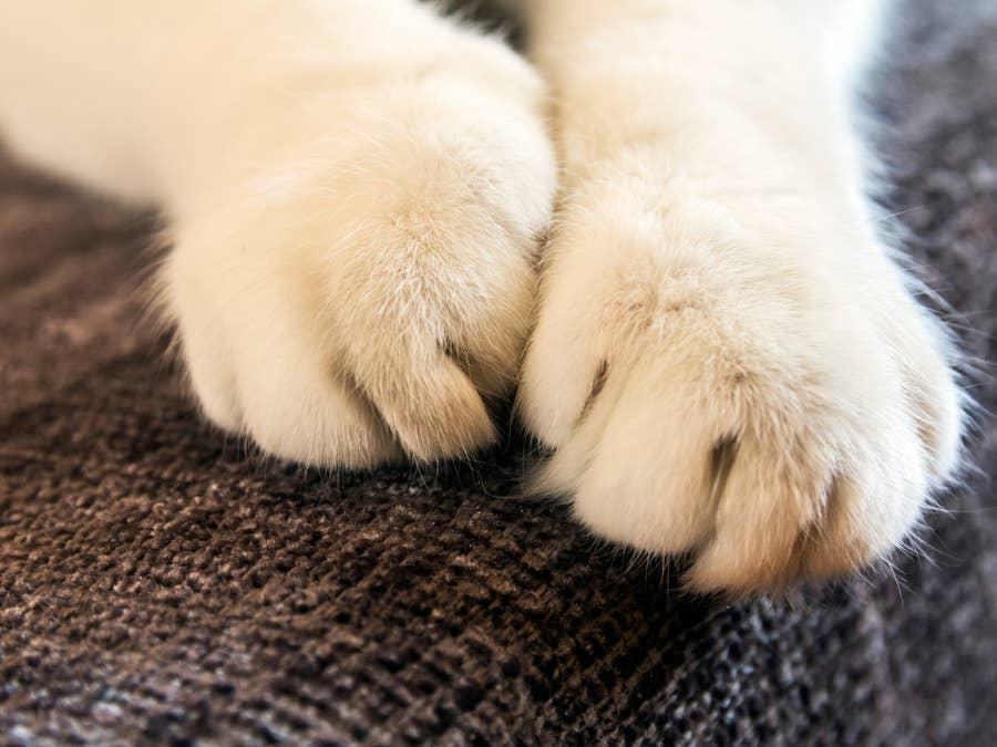 Cat claws.