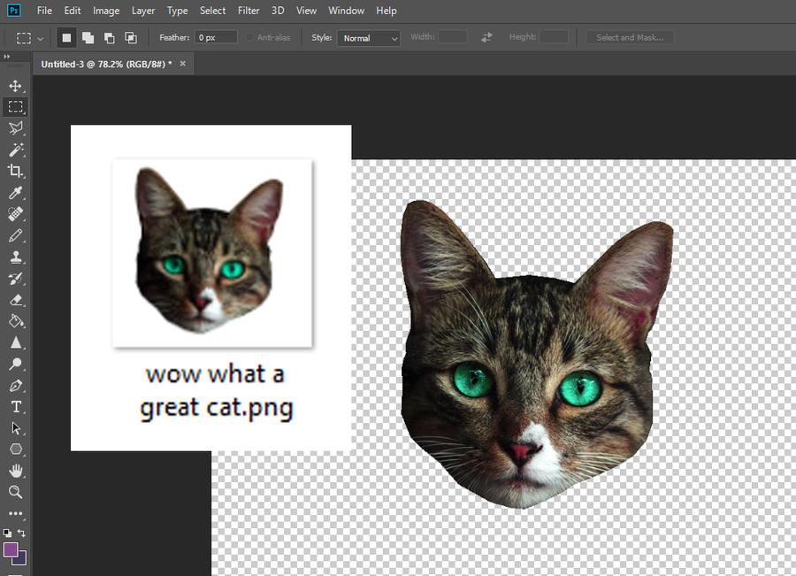 Transparent Background Cat Photoshop