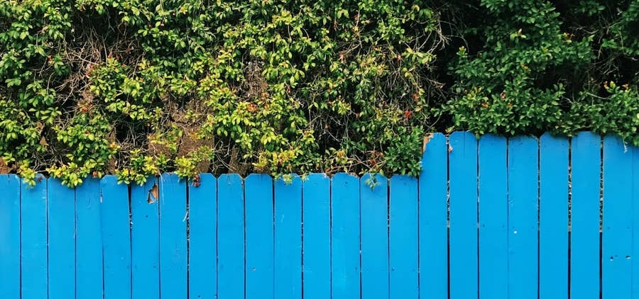 blue fencing backyard