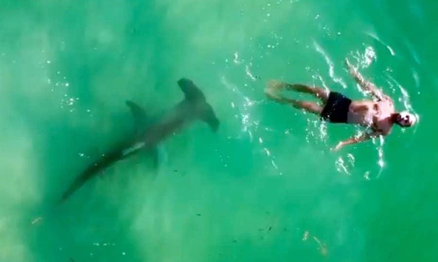 Drone shot of man with hammerhead shark