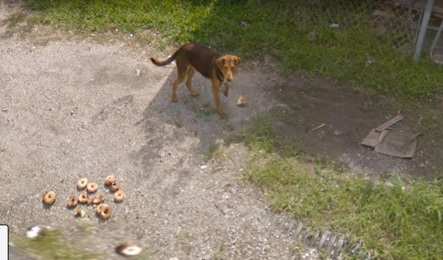 dog eating bagels