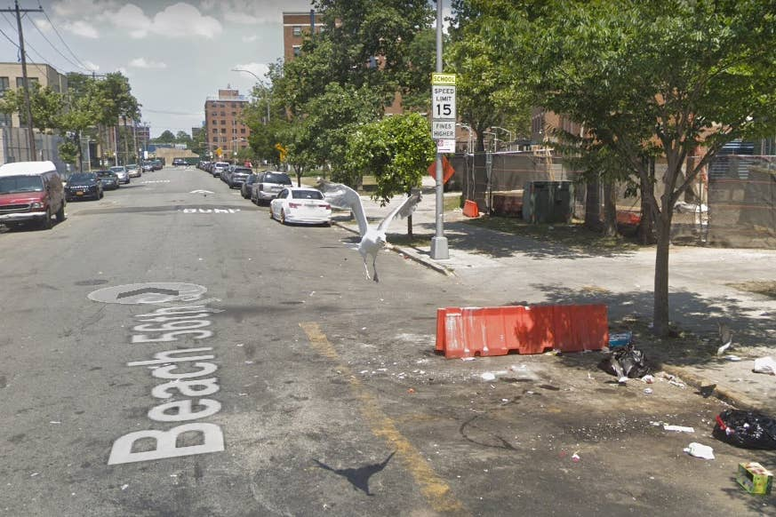 seagull google street images