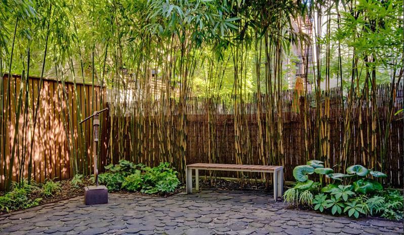 bamboo backyard around fence