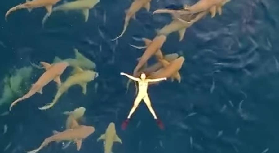 Drone footage of woman floating with sharks