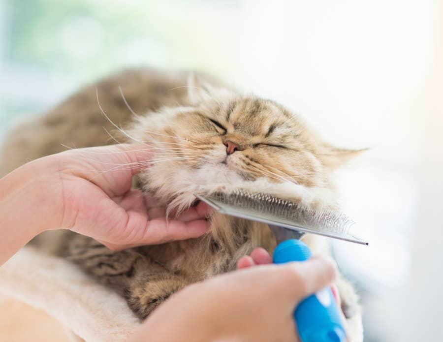 Brush your cat.