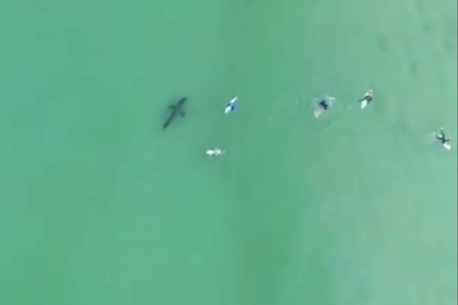 Great White Close to Surfers in South Africa