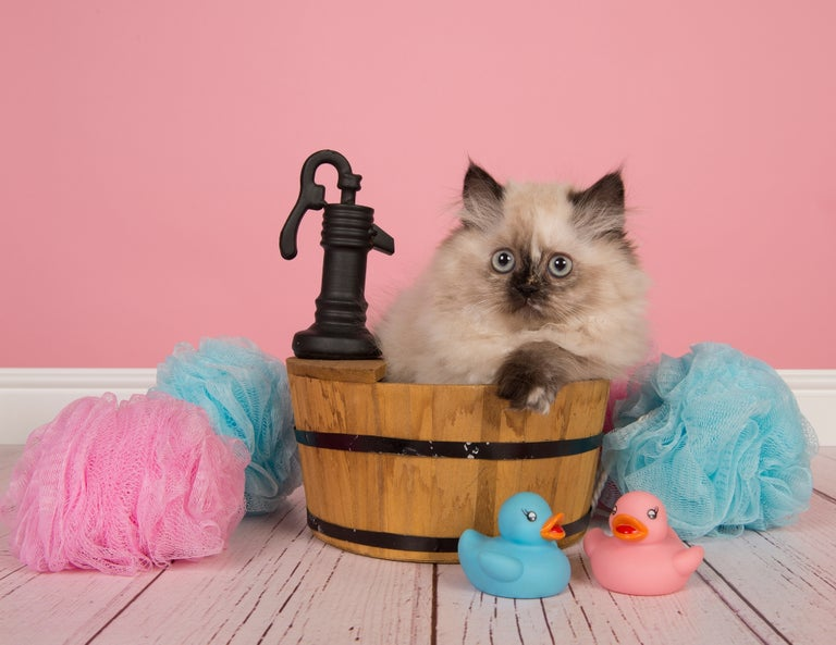 Cat bath.