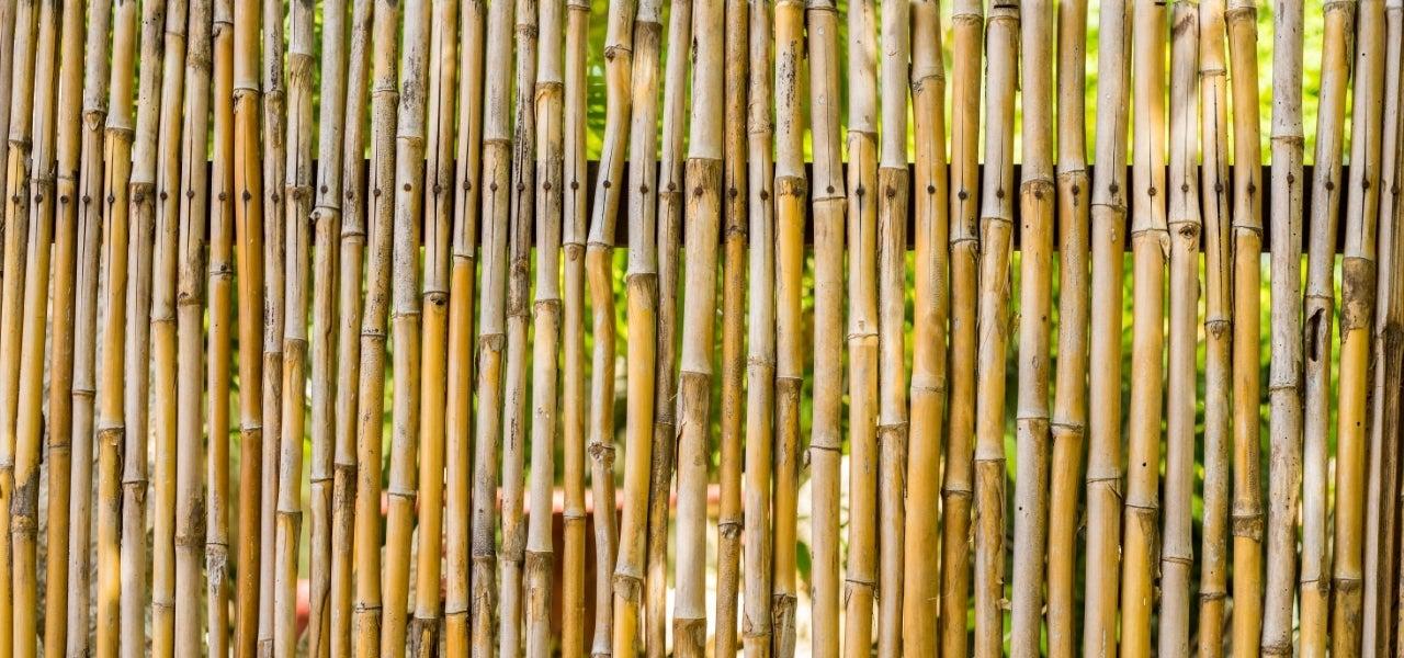 natural bamboo fencing