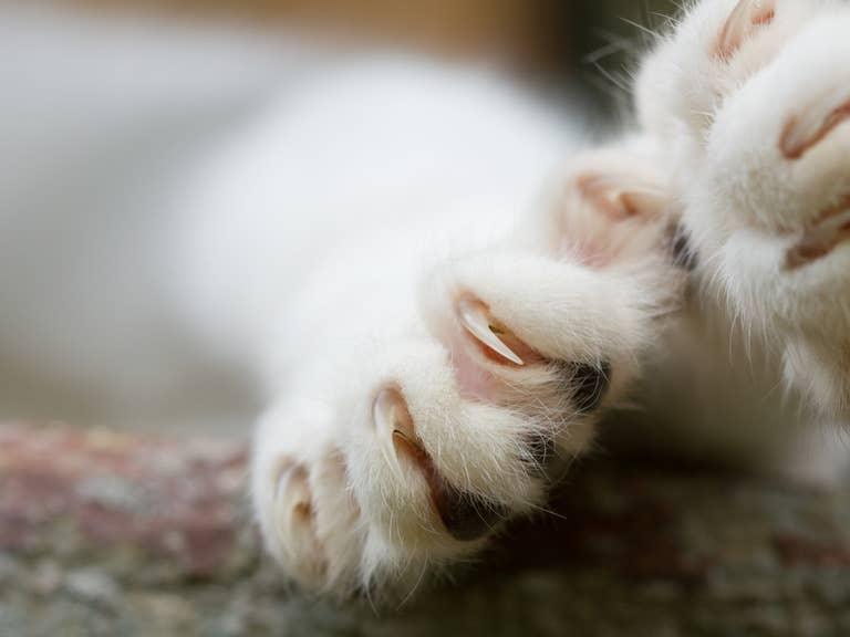 Claws up close.