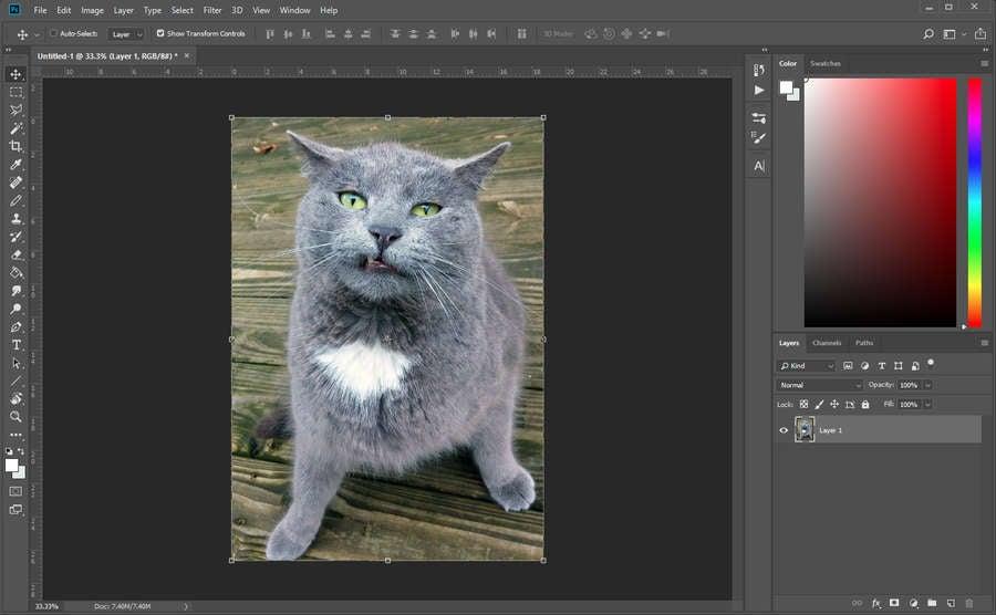 Photoshop Cat