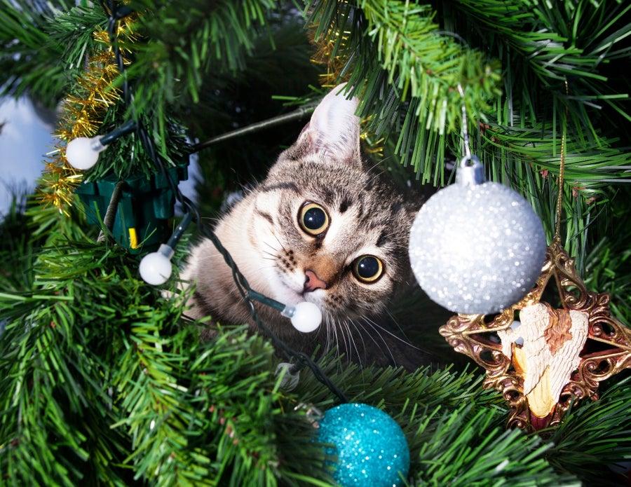 Cat in tree.